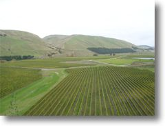 craggy range vineyard click